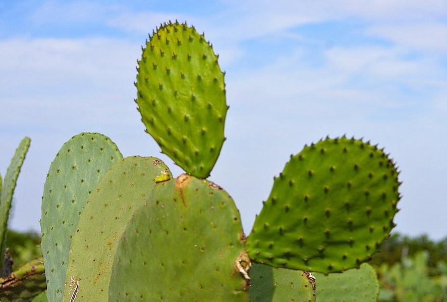 9 Fakta Unik Tentang Kaktus, Tumbuhan Berduri Khas Padang Pasir