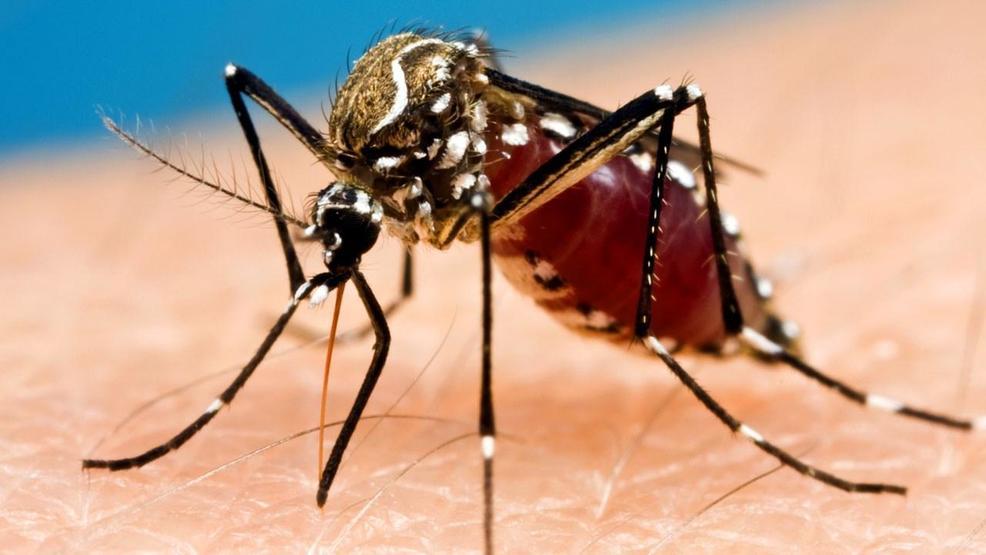 5 Fakta Unik Tentang Nyamuk, Serangga Kecil Penghisap Darah