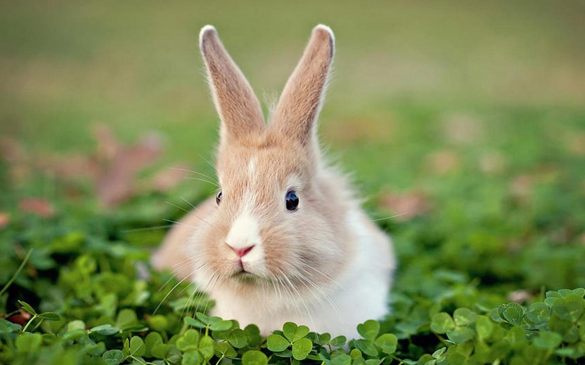12 Fakta Unik Tentang Kelinci, Hewan yang Lucu dan Menggemaskan