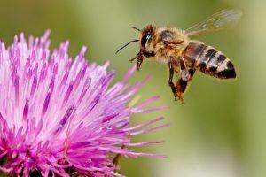 4 Fakta Unik Tentang Lebah, Hewan Kecil Penghasil Madu