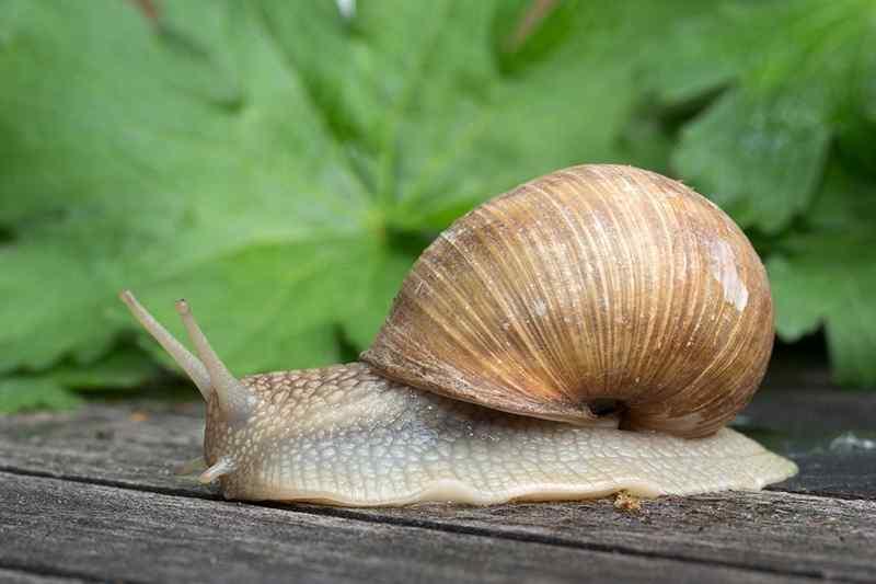 6 Fakta Unik Tentang Siput, Hewan Kecil yang Bercangkang