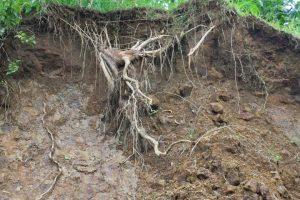 5 Kerusakan Lingkungan yang Disebabkan oleh Manusia