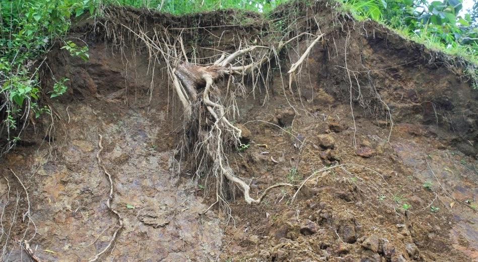 5 Contoh Kerusakan Lingkungan yang Disebabkan oleh Manusia