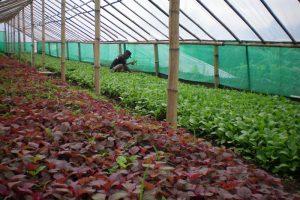 Suka Duka Bisnis Agrobisnis yang Perlu Kamu Tahu