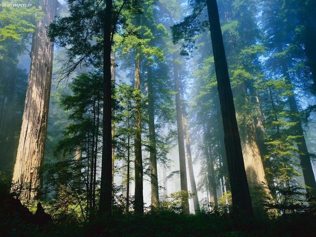 Sumber Daya Alam: Pengertian dan Jenis-Jenisnya Lengkap
