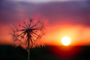 Manfaat Energi Matahari bagi Makhluk Hidup dan Lingkungan Sekitarnya