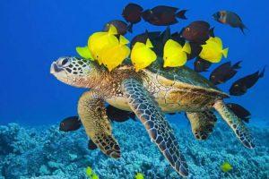 Hubungan Antar Makhluk Hidup | Simbiosis Komensalisme dan Contohnya